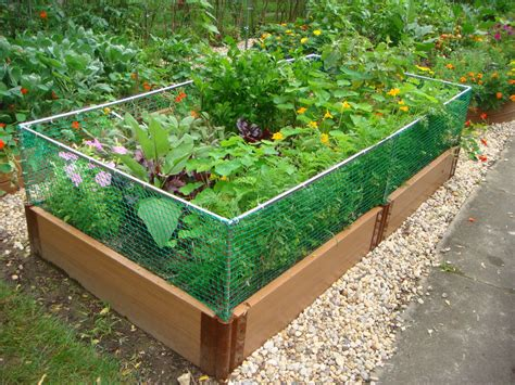 raised garden bed with fence raised garden fencing ideas photograph alternative gardnin