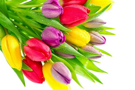 fonds d 233 cran fleurs multicolores