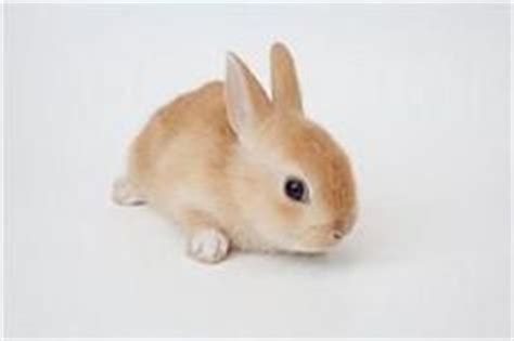 Light Brown Bunny by Light Brown Bunny Pics About Space