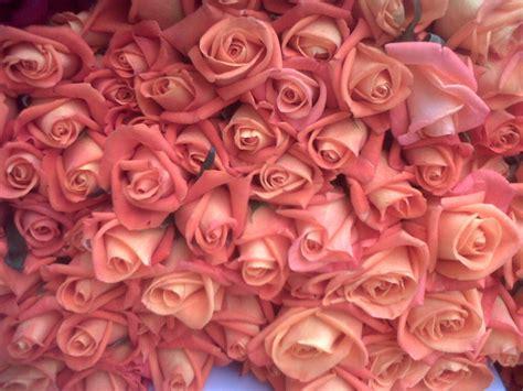 wallpaper bunga tumbrl bunga mawar search results dunia pictures page 2