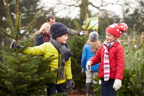 pine meadows christmas tree farm top 12 tree farms in the fraser valley valleymom ca