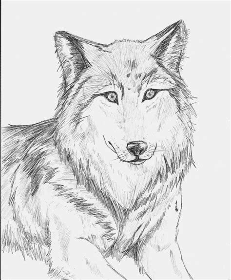 Sketches Wolf by Wolf Sketch By Cleopatrawolf On Deviantart