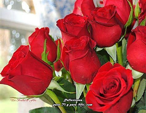 imagenes de rosas verdaderas buenos deseos para ti y para m 205 bellas rosas rojas