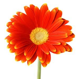 flower images www people okanagan bc ca rkjarsgaard images
