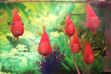 choose buy aquarium fish thesisdefinicionweb