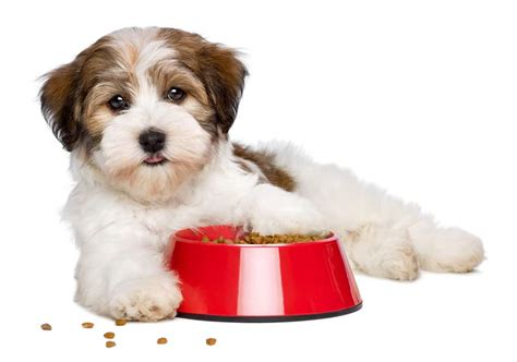 merrick puppy food review merrick food reviews and recalls in 2018 ultimate home