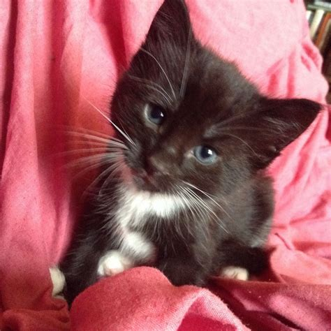 kittens for sale kittens for sale thornton heath surrey pets4homes