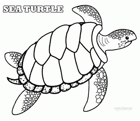 coloring pages of turtles coloring pages sea turtle printables coloring home
