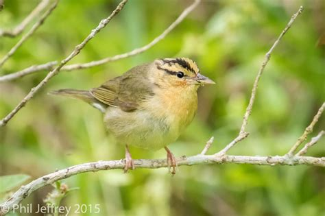 birding trip report for texas april 2015