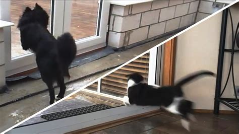 Cat Running Into Glass Door Cats And Dogs Vs Glass Doors Compilation New