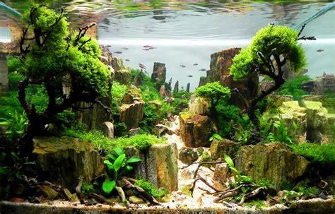 aquascape zeitschrift interview mit andr 233 franken aquariumeinrichten wie