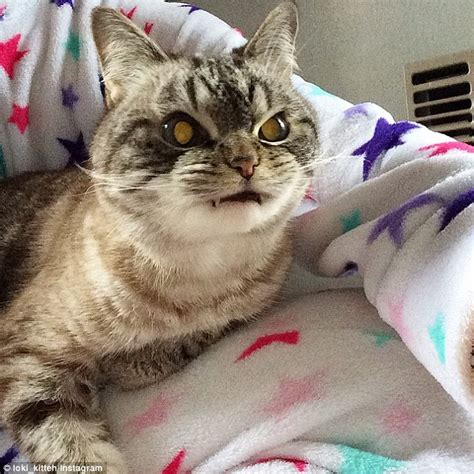 cat instagram loki the cat with like teeth is turning into an