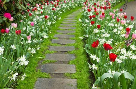imagenes de jardines flores flores bonitas que no deben faltar en el jard 237 n