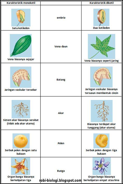 perbedaan monokotil  dikotil belajar biologi