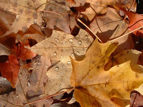 google images fall leaves focal point styling w e l c o m e fall today