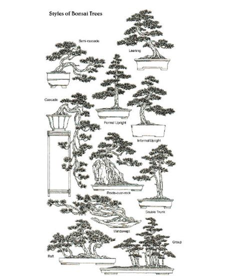 different styles of architecture bonsai styles abubaker siddiq shekhani blog