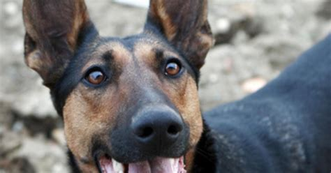 types of cancer in dogs types of bone cancer in dogs ehow uk