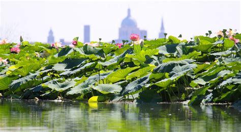 fiori di loto mantova mantova weekend nella splendida citt 224 dei gonzaga tgtourism