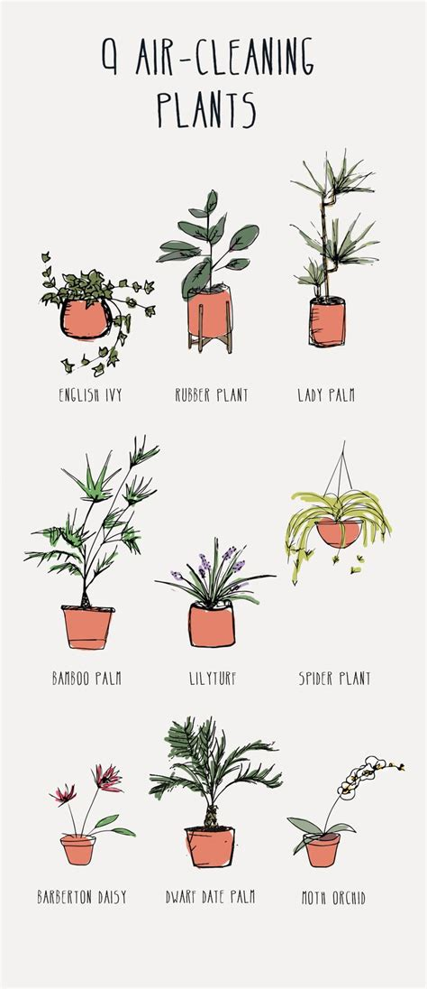best home plants 25 best ideas about bedroom plants on plants
