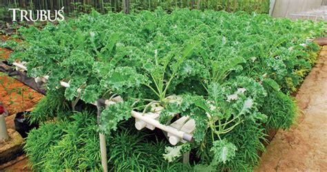 Hidroponik St4018 Buku Peluang Bisnis Sayuran Perkotaan Hidroponik T hidroponik sayuran ningrat trubus