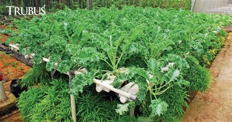 Netpot Lokal Pot Jaring Hidroponik Untuk Tanaman Buah Diameter 10 Cm Hidroponik Sayuran Ningrat Trubus