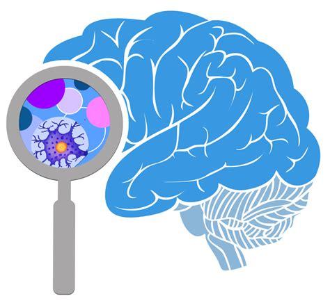 brain images 3rd annual brain initiative investigators meeting the