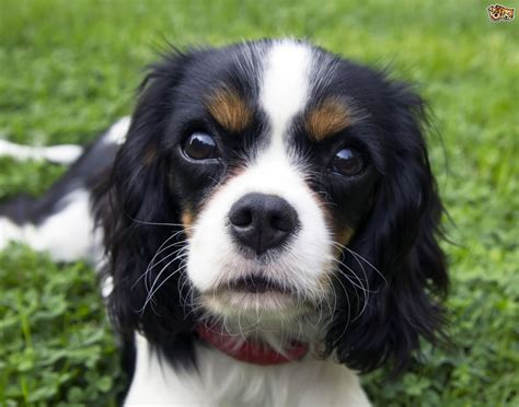 what causes seizures in dogs the most common causes of seizures in dogs pets4homes
