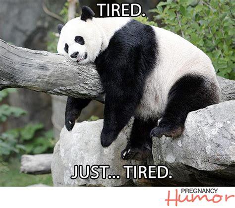 Panda Meme - funny panda memes