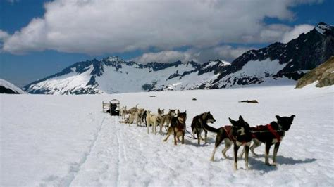 sledding alaska helicopter and sled tour juneau alaska alaska pacific northwest shoretrips
