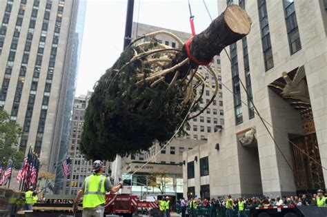 rockefeller center christmas tree goes up midtown new