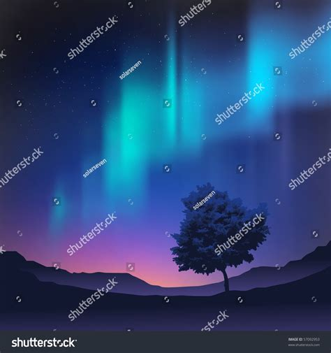 the northern lights tree the northern lights with a tree in the foreground vector