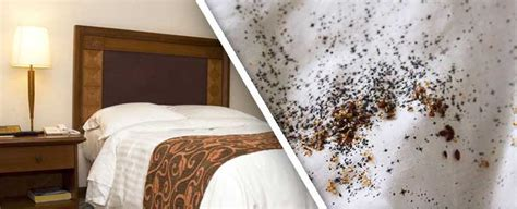 can you freeze bed bugs bed bug exterminator queens ny queens bed bug removal experts