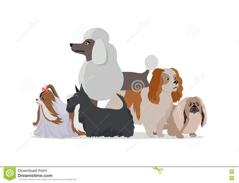 dog grooming grooming different dog breeds dog grooming banner long haired dog breeds vector