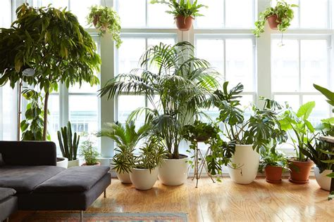 8 houseplants that can survive urban apartments low light 8 houseplants that can survive urban apartments low light