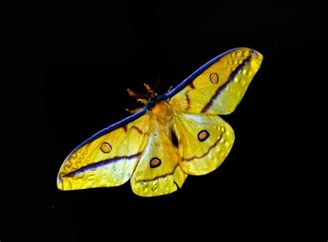 visitor pattern c black wasp ilmaisia kuvia luonto siipi kukka villiel 228 imet villi
