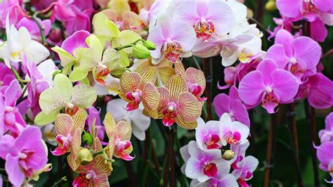 entretien orchidee apprendre  bien soccuper dune