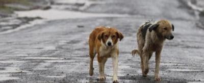 divieto d ingresso ai cani 171 divieto d ingresso ai cani quot stranieri quot 187 accade in una