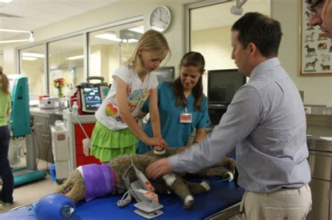 Shands Hospital Emergency Room Phone Number by Uf College Of Veterinary Medicine To Hold Open House Uf