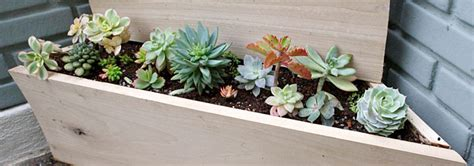 plantgasm my new two tier low water triangle planter