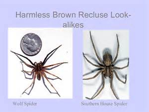Difference Between Bed Bug Bite And Mosquito Brown Recluse Spider Myth Of The
