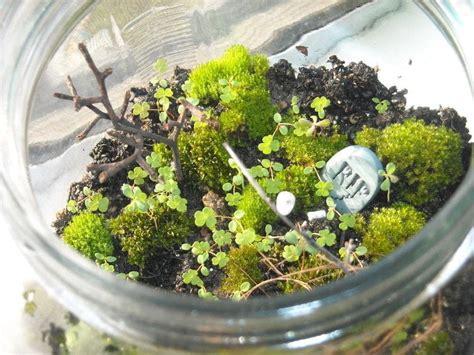 moss terrarium 183 how to make a terrarium 183 gardening on