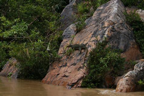 taman negara national park  malaysia thousand wonders