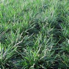 1000 images about tanaman hias daun on