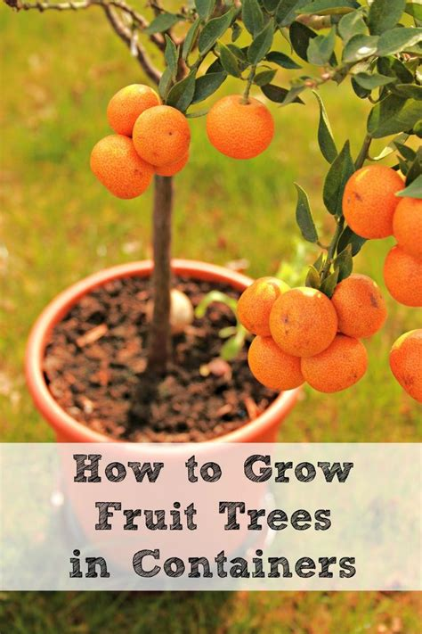 container gardening fruit 17 best images about gardening plants on
