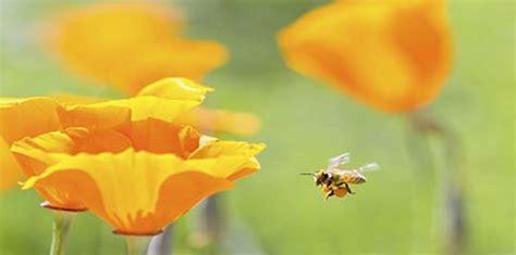 spedire fiori a spedire fiori a domicilio a arezzo floraqueen
