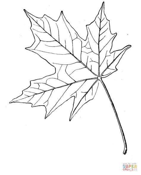 coloring page of maple tree sugar maple leaf coloring page free printable coloring pages