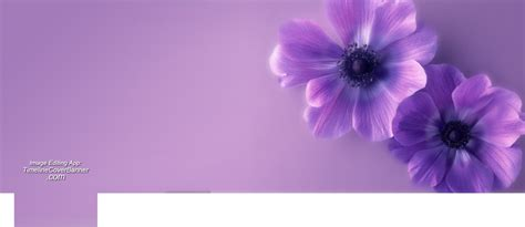 Purple Slipcover soft focused purple flower on wall cover timelinecoverbanner