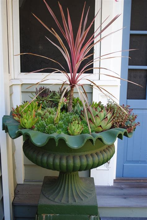 photo 4 tall and spiky cordyline in the garden pinterest