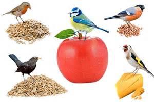 even birds need 5 a day that s oats apples nuts