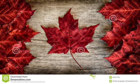 real leaf canada flag on weathered cedar stock images